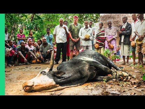 African Cow Feeds ENTIRE Village!!! Rare Tradition in Madagascar!!
