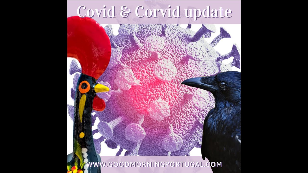 Portugal news, weather & today: covid (and corvid) update